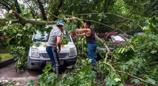 Более 30 деревьев повалил ветер в Москве