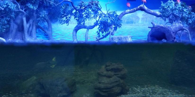Крокус океанариум